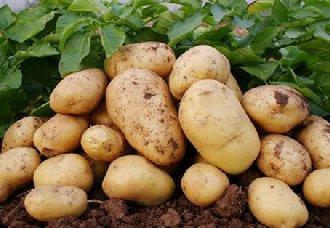 <b>马铃薯一斤多少钱?</b>