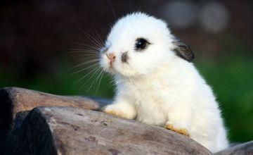 <b>幼兔拉稀是什么原因导致的?幼兔吃什么比较好?</b>
