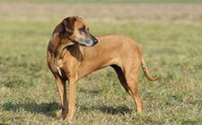 <b>犬营养性贫血症要如何诊断?我们该采取什么防治措施?</b>