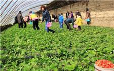 青海西宁打造绿色精品 助农产品畅销全国