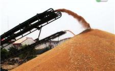 安徽省启动中晚稻最低收购预案 资金充足确保农民利益