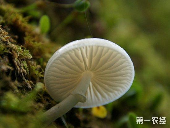 蘑菇常见的病害以及防治方法