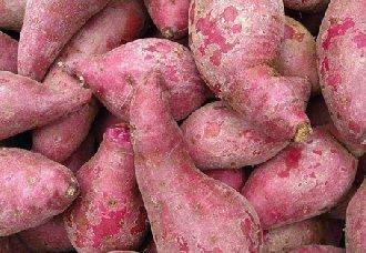 紫薯要怎么种?紫薯的种植技术