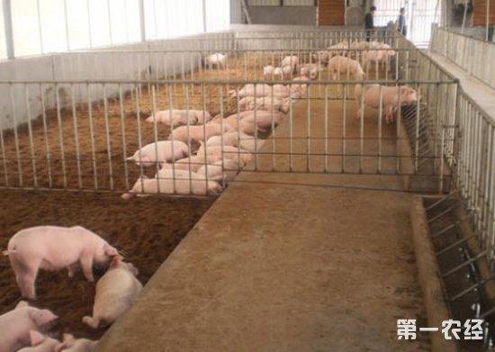 养猪大户何婷婷:帮乡亲解决养猪难题,助贫困户脱贫增收