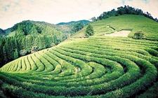 <b>重庆:种好希望茶 实现致富梦</b>