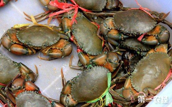 2018年10月18日各地区不同规格螃蟹价格
