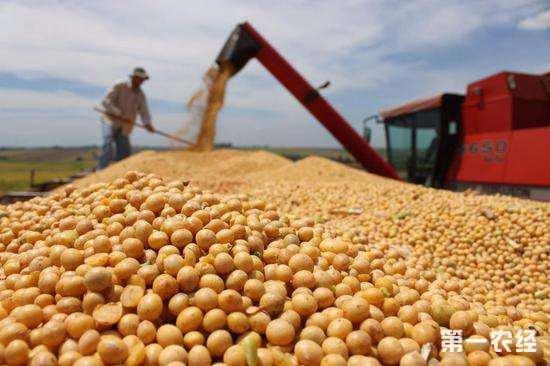 农业部表示:大豆供应稳定,不会出现大的价格波动