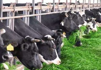 <b>广东江门蓬江:将禁养畜禽养殖 将于明年6月底前全部清除</b>
