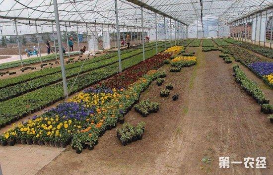 大棚花卉怎么种?常见温室大棚花卉有哪些?大棚养花注意事项