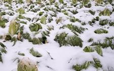 <b>农业上比较常见的气象灾害有哪些?农民该如何预防,避免受重创?</b>