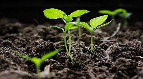 河北:多个县市区成为我国开展果菜有机肥替代化肥的试点