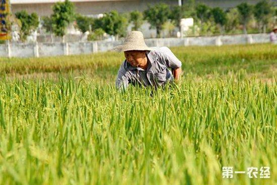 我国水稻育种发展快速,育种优异性状突出
