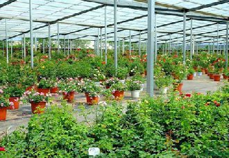 <b>安徽:全面推进苗木花卉产业转型升级发展</b>