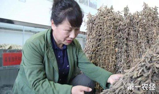 """""""金豆娘娘""""李艳华:致力研发最好的大豆品种"""