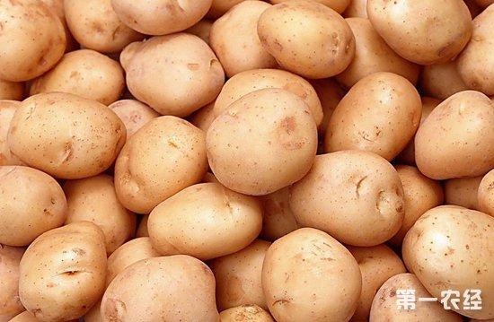 """土豆变""""金豆"""",带领着农民奔向小康之路"""
