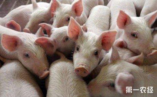 可爱如猪四字壁纸