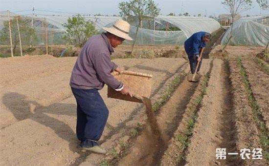 有机肥替代化肥