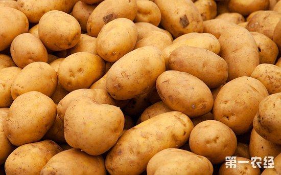 2018年10月25日我国马铃薯价格不变行情偏弱