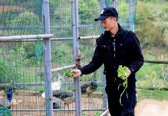 成海兵:开启了带领贫困乡亲们的蓝孔雀养殖之路