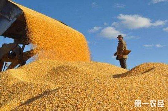 """湖北枝江:""""优质粮食工程""""助力农民增收"""