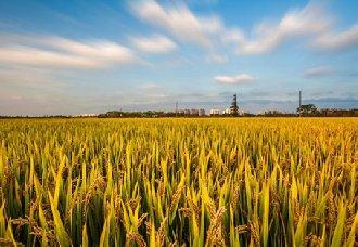 <b>科技创新为提升农业水平提供有力支撑</b>