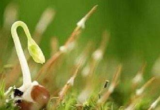 果菜茶生产对机械化的需求越来越迫切