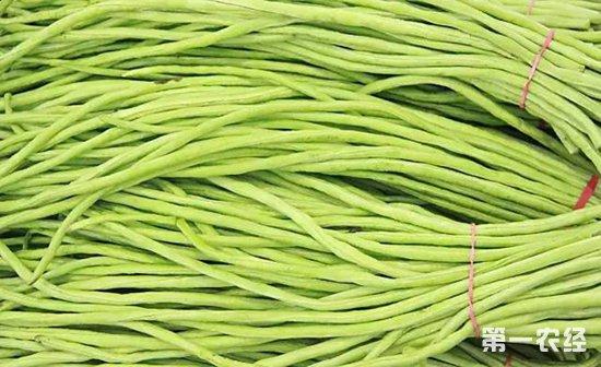 豇豆煤霉病的症状以及防治措施