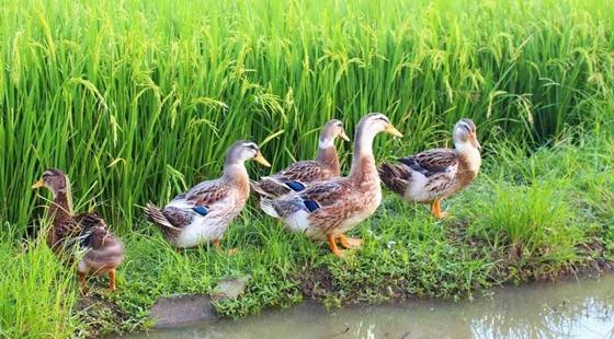 陕西咸阳:全面推进畜禽健康养殖项目建设