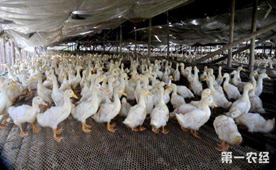 畜禽健康养殖