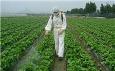 我国禁止和限制使用的农药有哪些