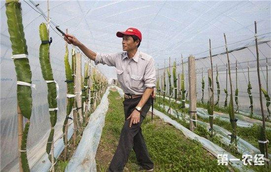 中国农民如何职业化?可借鉴国外成熟经验