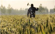 土地流转之后 粮食补贴发给谁?