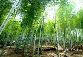 <b>贵州:力争到2020年全省森林覆盖率达到60%</b>