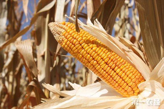 2018年10月29日东北地区玉米价格行情