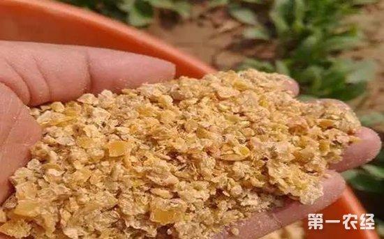 国内豆粕价格低迷 11月后市也难走强