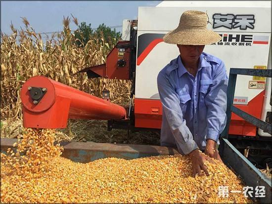 玉米籽粒直收实现国产化,将带动我国玉米生产迈上新台阶