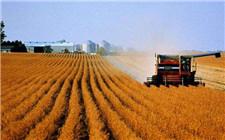 中美贸易战逼迫美国农业结构改变