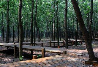 北京:平原地区生态林总面积已达150余万亩