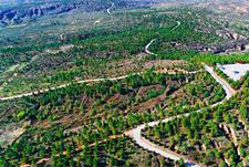 陕西真抓实干成效显著 林业助力美丽中国建设