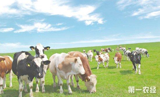 奶业振兴面临诸多挑战,亟待科技强力支撑