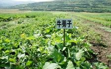 <b>湖南省洪江市:中药材产业帮助脱贫致富</b>