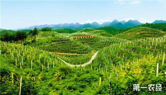 国际山地现代农业与减贫研讨会