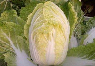 白菜常见的病虫害有哪些?白菜常见病虫害与防治方法