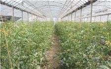 不申请就没得领 江西省推出水果分级机和温室大棚补贴