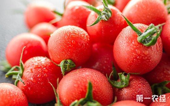 西红柿价格四个月来疯涨84% 创近三年新高