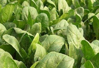 四川:计划种植小春油菜1600万亩 将在扩大15万亩左右
