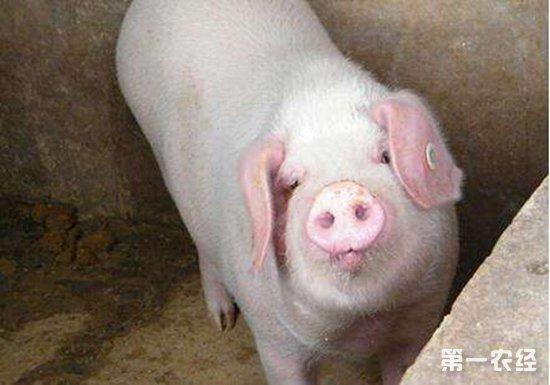 非洲猪瘟:目前已有14个疫区解封