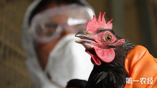 最新发现:H7N9或已突变成可通过飞沫在空气中传播
