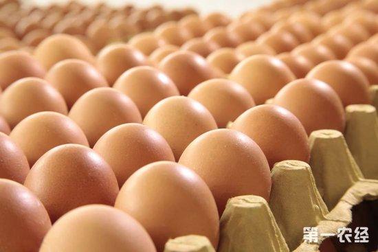 2018年11月5日养鸡市场行情如何?今日养鸡行情概述