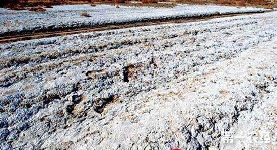 宁夏对78.6万亩盐碱地实施改良,取得显著成效